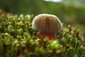 Champignons32 by hubert61