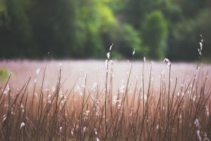 in the reed by JonathanMH
