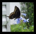 butterflies by mylivingphotography