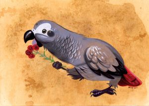 African Gray Parrot by Pocketowl