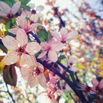 this is was spring by a-place4my-head