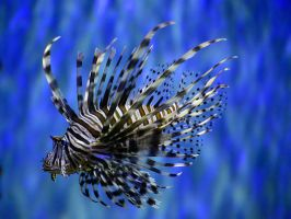 Another striped animal by NB-Photo