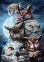 Owls squad by Yanosik