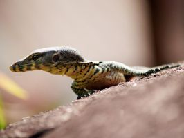 reptile 012 by jitspics