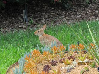 St Louis Botanical Gardens: The Fuzzy Guest by Louie-Jr