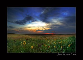 Wild Sunflowers of the Sunrise by kkart