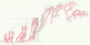 Animal Motion Study 2: cat by GoblinQueeen