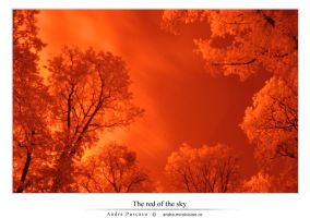 The red of the sky by Andrutzik