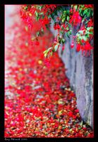 Petal's Fall by Aderet