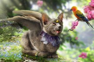 Catgriff by tamaraR