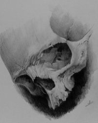 skull1 by MOTH-Simeonov