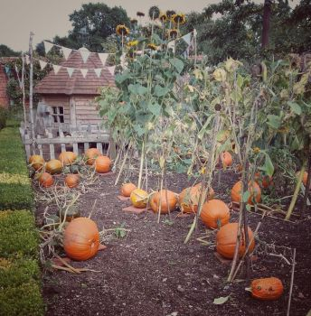 Pumpkin patch by SilverMixx