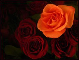 ORANGE AND RED ROSES by THOM-B-FOTO