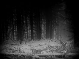 _____________ by Weissglut