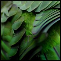 Feathers by Caelitha