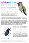 Science Fact Friday: Iridescence by Alithographica