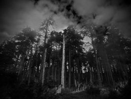 What Do The Trees Say by LAPoetry-n-Photo