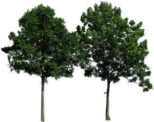 Tree 49 png by gd08