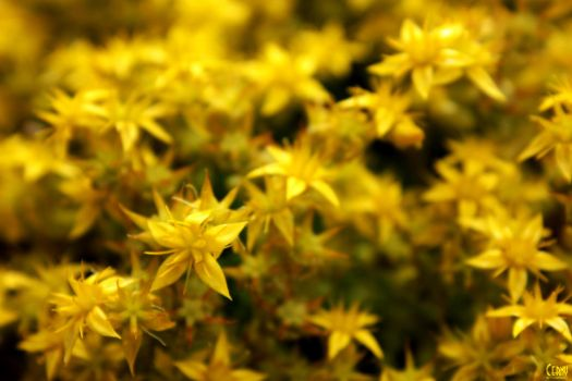 Yellow by webname05