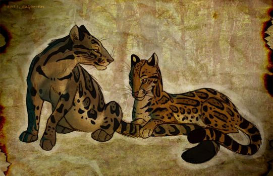 Clouded Leopard. Ocelot. by Culpeo-Fox