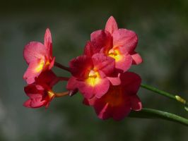 My Orchid35-2 by Otoff