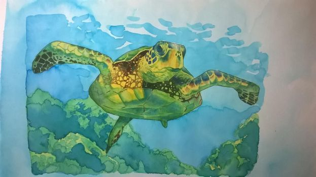 Turtle by enzoacunzo