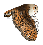 How I Draw A: Barn Owl (request) by horse14t