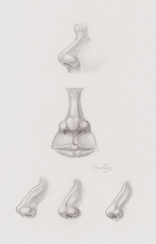 Noses by F33R-the-B33R