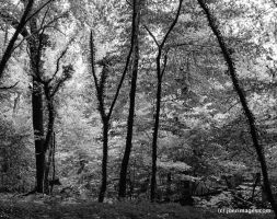 A forest by joerimages