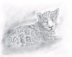 Leopard Cub by SubLeLumiere