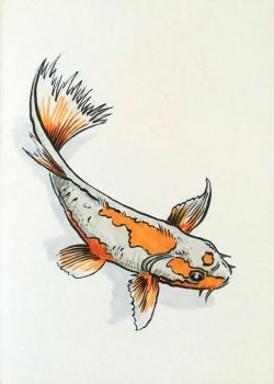 Don't be Koi! by JimCampbell