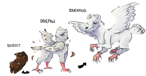 dovewing evolution line by vkyw