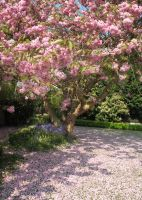Pink Blossom Tree by Its-Only-Stock