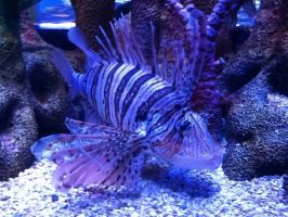 Lionfish by TOontownSoul