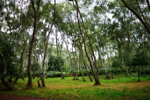 DSC 0319 Sherwood Forest by wintersmagicstock