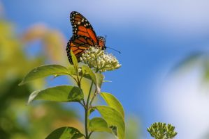 Butterfly by StacySPhotography