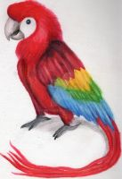 Parrot - Coloured Pencils and Solvent by Gryffycake