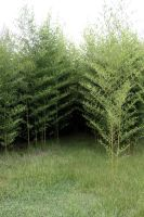 Bamboo Forest-Stock by Stock-Tography