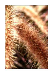 Plant Follicle by KevinStephens