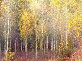 Land of the silver birch by Morgan-Lou