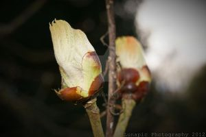 Buds by Lunapic