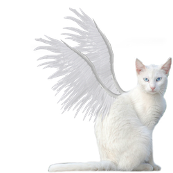 Winged Kitty PNG Stock by vamp1967