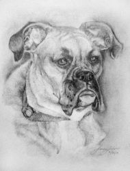 Another Dog portrait by llesliedesign