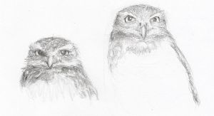 Owls by simbalm