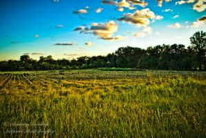 blue and green by Tommy8250