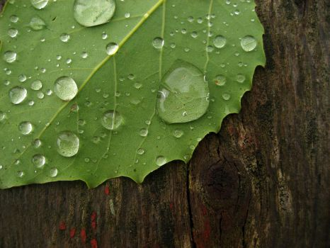 Leaf and rain drops by KMourzenko