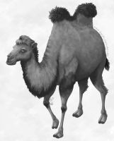 Camels are the new llamas by boldtSketches