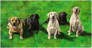 Beautiful Labradors by Bonniemarie