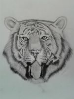 Tiger drawing by NikkouViolet