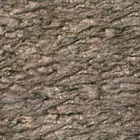 Seamless Tree Bark Texture by cfrevoir